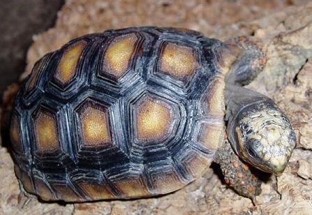 Sköldpaddsbilder