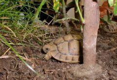 Raphael & Donatello