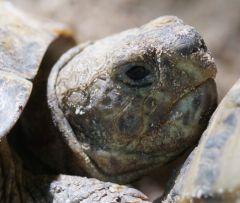 Våra sköldpaddor