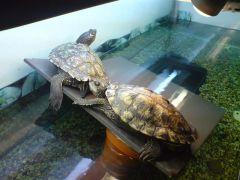 Mina sköldpaddor