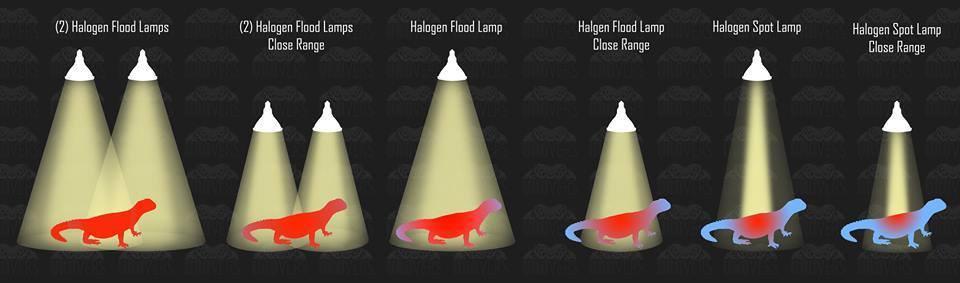 flood-spot (4).jpg