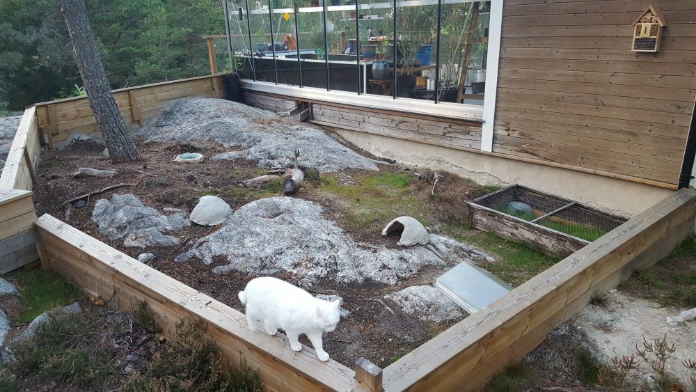 Hage och låda i växthuset_2016-09-27 18.10.22.jpg